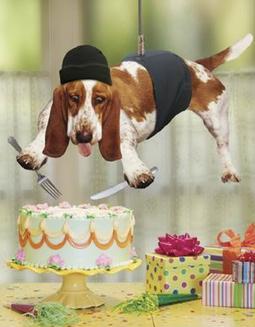 Шуточные поздравления с днем рождения